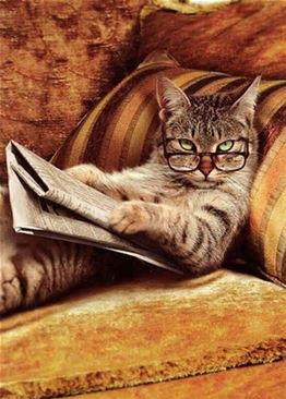 I can't think of anything clever to say, so here's a picture of a cat reading.